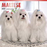 Maltese - 2017 Calendar Kalenders