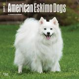 American Eskimo Dogs - 2017 Calendar Kalendarze