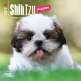 Shih Tzu Puppies - 2017 Mini Calendar Kalendarze