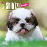 Shih Tzu Puppies - 2017 Mini Calendar Calendars