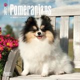 Pomeranians - 2017 Mini Calendar Kalendarze