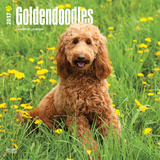 Goldendoodles - 2017 Calendar - Takvimler