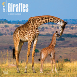Giraffes - 2017 Calendar Kalendarze