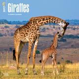 Giraffes - 2017 Calendar Calendars