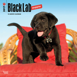 Black Labrador Retriever Puppies - 2017 Calendar Kalendarze