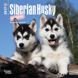 Siberian Husky Puppies - 2017 Mini Calendar Calendars
