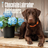 Chocolate Labrador Retrievers - 2017 Calendar Calendars