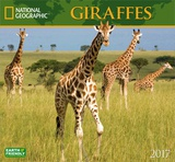 National Geographic Giraffes - 2017 Calendar Calendars