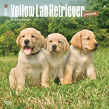 Yellow Labrador Retriever Puppies - 2017 Calendar Calendriers