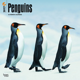 Penguins - 2017 Calendar - Takvimler