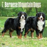 Bernese Mountain Dogs - 2017 Calendar Kalendarze