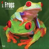 Frogs - 2017 Calendar Kalendarze