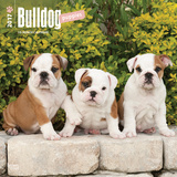 Bulldog Puppies - 2017 Calendar Kalendarze