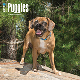 Puggles - 2017 Calendar Kalendarze