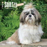 Shih Tzu Puppies - 2017 Calendar Calendars