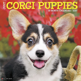 Just Corgi Puppies - 2017 Calendar Kalendere