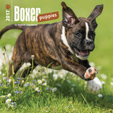 Boxer Puppies - 2017 Mini Calendar Kalendarze