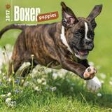 Boxer Puppies - 2017 Mini Calendar - Takvimler