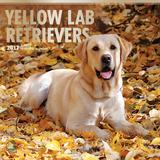 Yellow Labrador Retrievers - 2017 Calendar Kalendarze