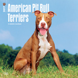 American Pit Bull Terriers - 2017 Calendar Calendars