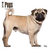 Pugs - 2017 Calendar Kalendarze