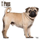 Pugs - 2017 Calendar Kalenders