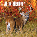 White-Tailed Deer - 2017 Calendar Calendriers