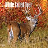 White-Tailed Deer - 2017 Calendar - Takvimler