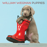 William Wegman Puppies - 2017 Calendar Calendars