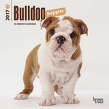 Bulldog Puppies - 2017 Mini Calendar Calendriers