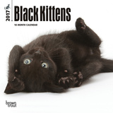 Black Kittens - 2017 Mini Calendar Calendars