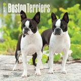 Boston Terriers - 2017 Calendar Kalendarze