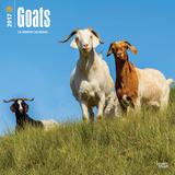 Goats - 2017 Calendar Kalendarze
