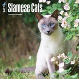 Siamese Cats - 2017 Calendar Kalendarze