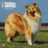 Collies - 2017 Calendar Calendriers