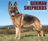 Just German Shepherds - 2017 Boxed Calendar Calendars