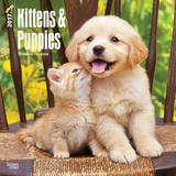 Kittens & Puppies - 2017 Calendar Calendriers