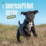 American Pit Bull Terrier Puppies - 2017 Mini Calendar Kalenders
