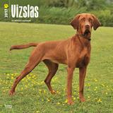 Vizslas - 2017 Calendar Calendars