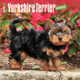 Yorkshire Terrier Puppies - 2017 Calendar Calendriers