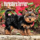 Yorkshire Terrier Puppies - 2017 Calendar Kalenders