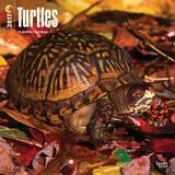 Turtles - 2017 Calendar Kalendáře