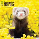 Ferrets - 2017 Calendar Kalendarze