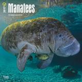 Manatees - 2017 Calendar Calendars