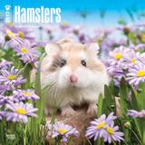 Hamsters - 2017 Calendar Calendars