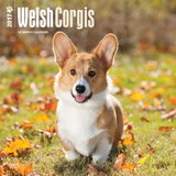 Welsh Corgis - 2017 Calendar Calendars