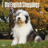 Old English Sheepdogs - 2017 Calendar Kalendarze