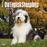 Old English Sheepdogs - 2017 Calendar Calendars
