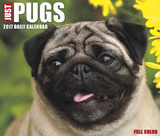 Just Pugs - 2017 Boxed Calendar Calendars