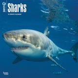 Sharks - 2017 Calendar Kalendere